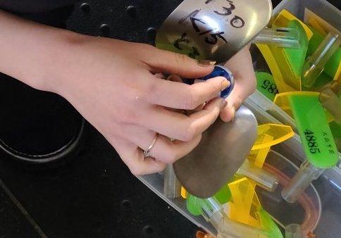 大山選手の右手の薬指に指輪がついてる画像。